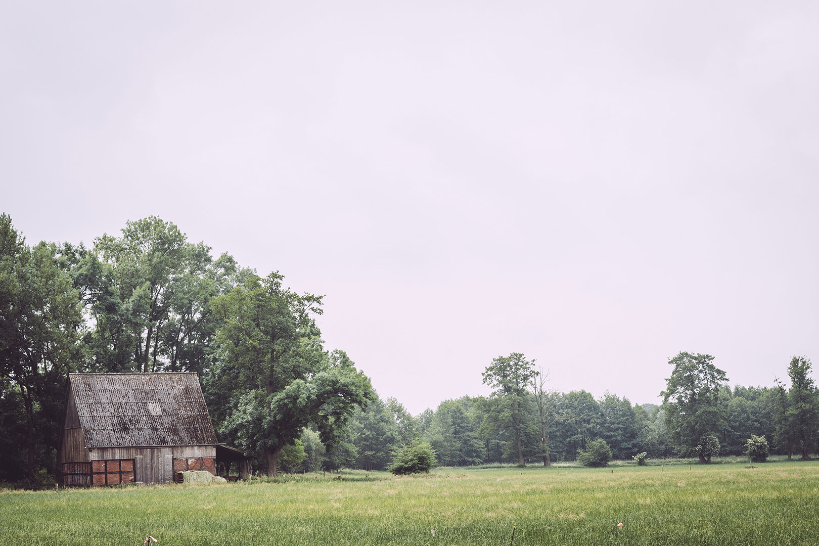 Wiese, Bäume und Himmel in Fischerhude (Verden, Niedersachsen)