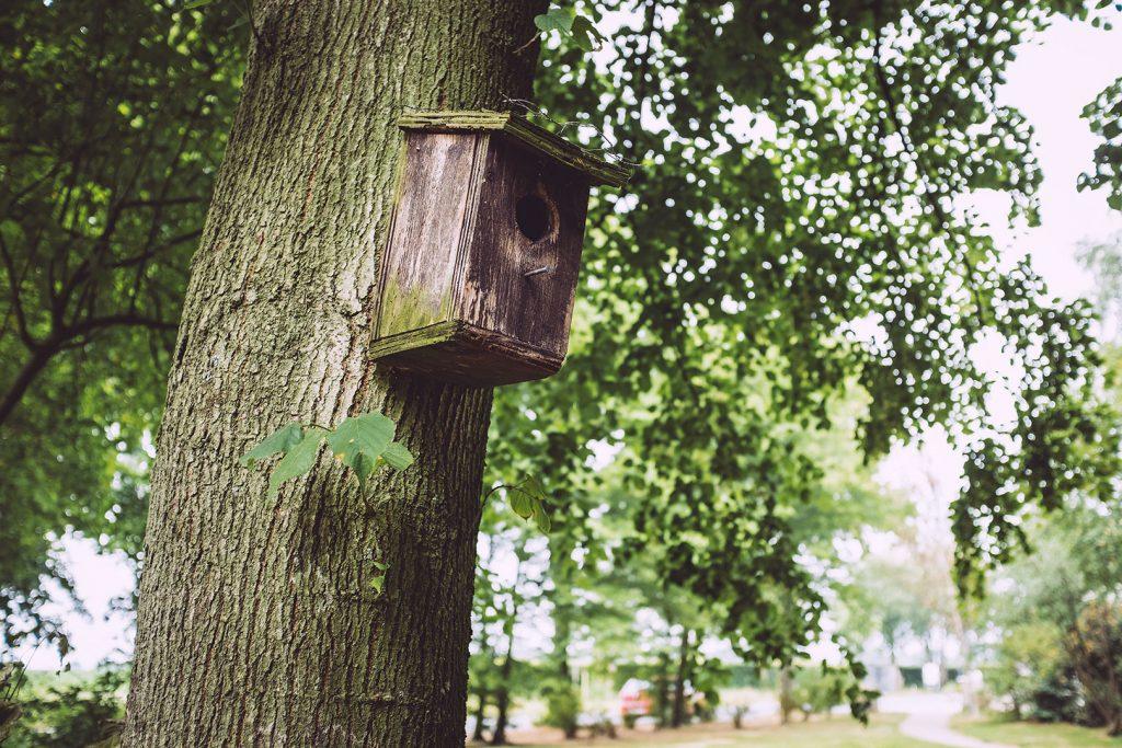 Vogelhaus am Baum in Hassendorf (Sottrum, Niedersachsen)