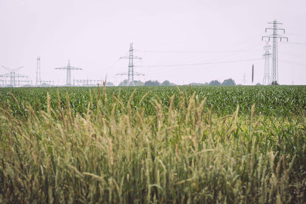Feld in Hassendorf (Sottrum, Niedersachsen)