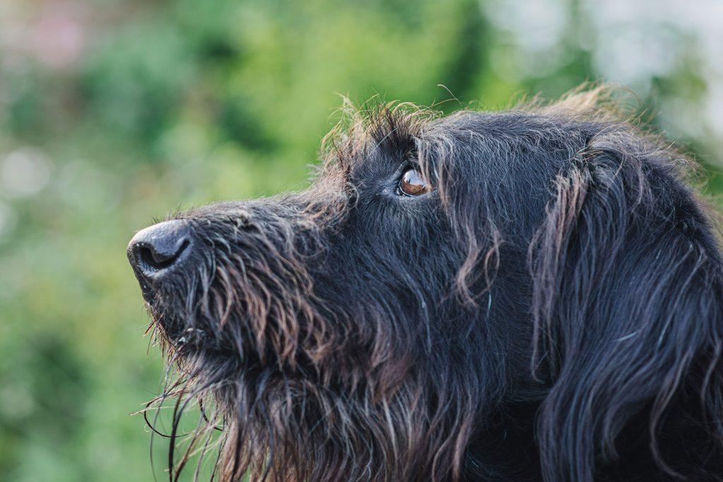 Hund in Utlandshörn