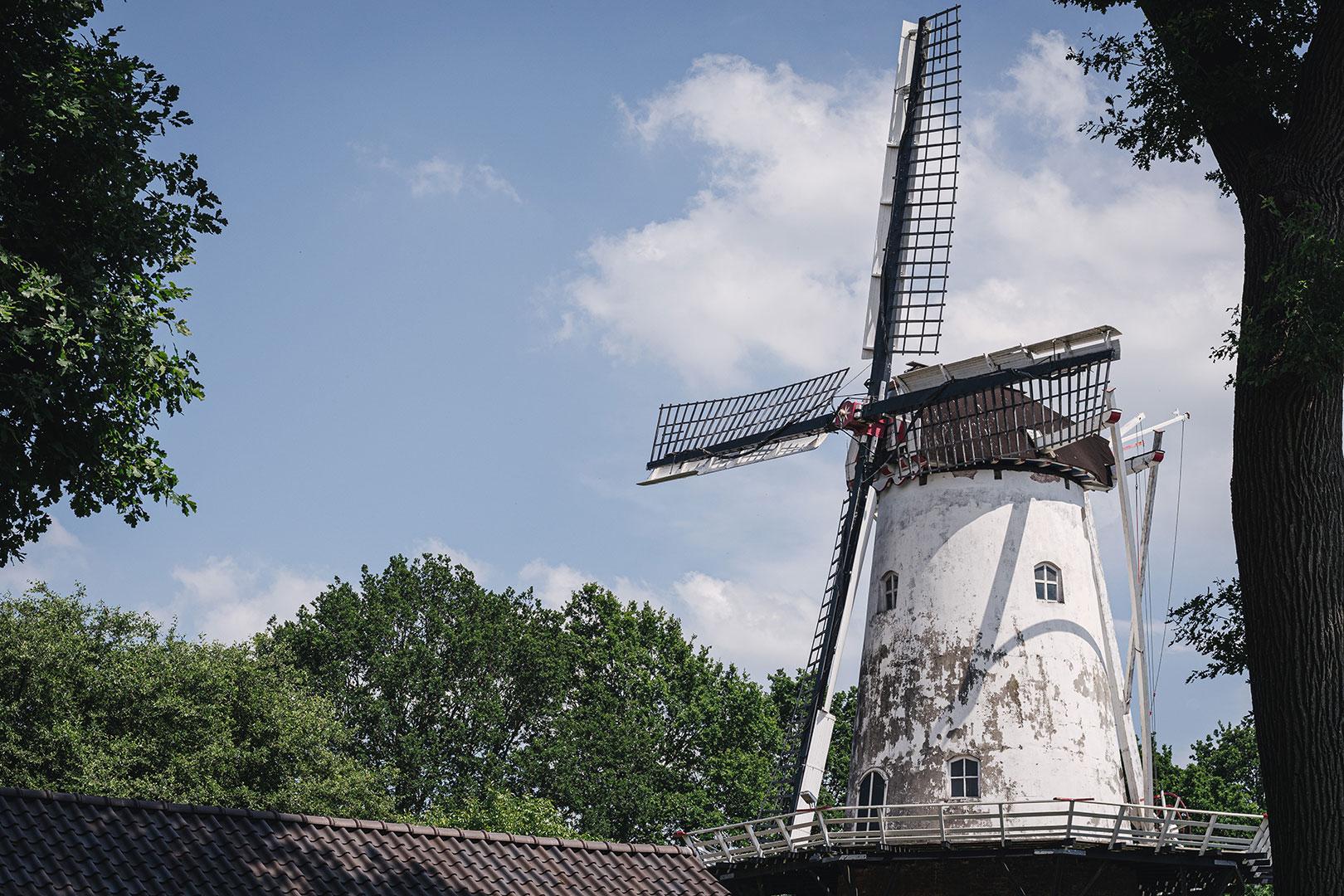 Mühle in Bellingwolde