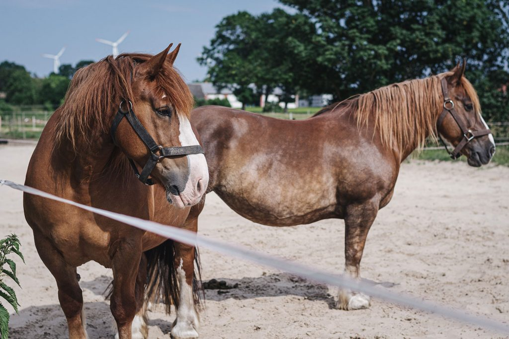 Pfredekoppel der Lazy Horse Ranch
