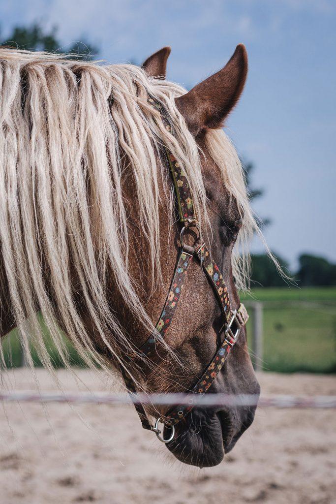 Pferd der Lazy Horse Ranch