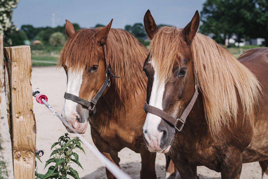 Pferde auf der Lazy Horse Ranch