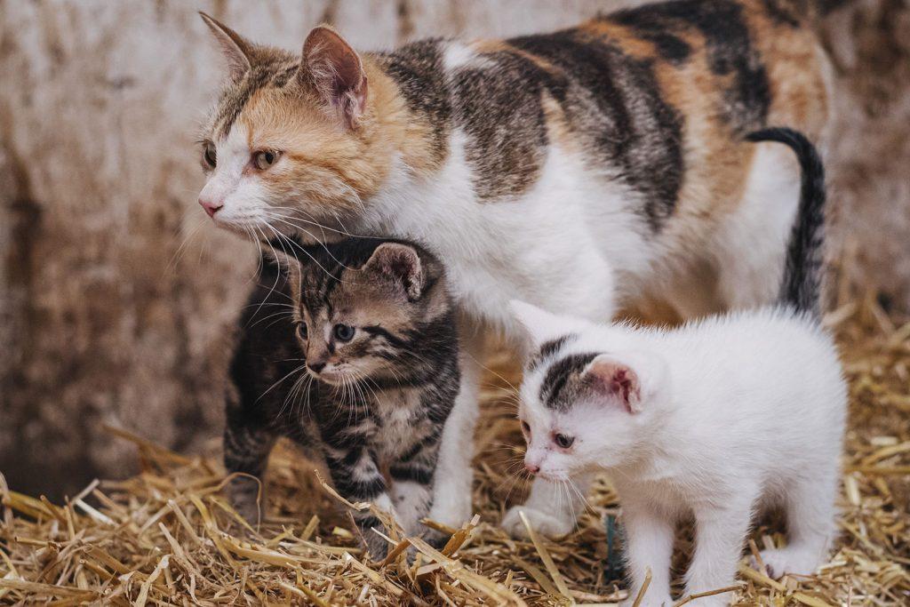 Katzenfamilie auf der Lazy Horse Ranch