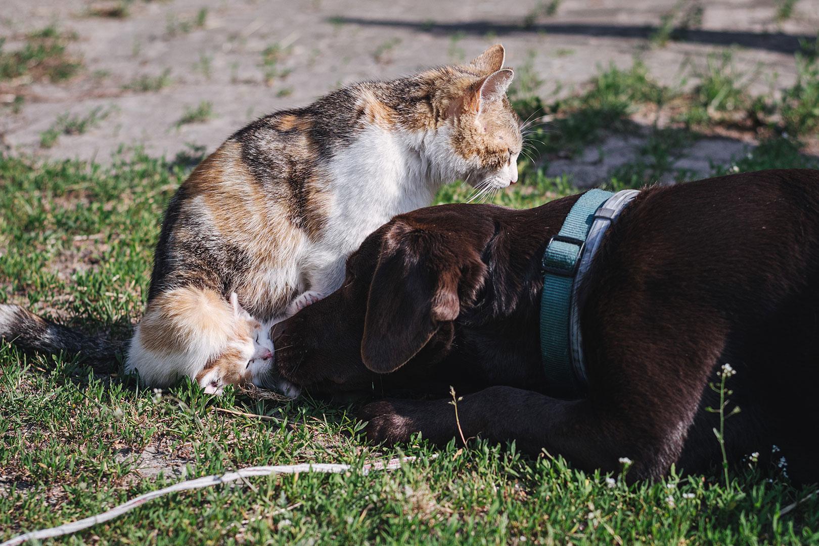 Hund und Katze der Lazy Horse Ranch