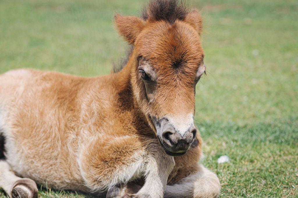 Kleines Pony im Tierpark Weeze