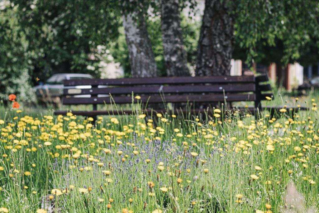 Blumenwiese in Ouren
