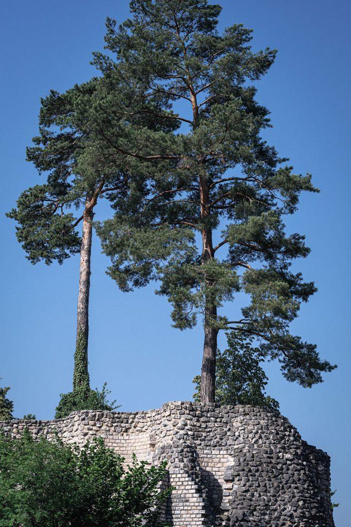 Baum auf dem Römischen Theater in Augst