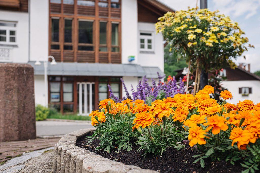 Blumen in Jungholz