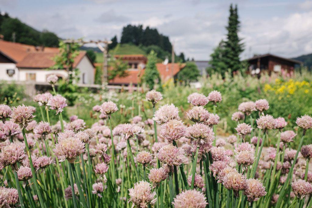 Kräutergarten in Jungholz