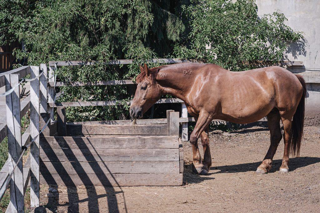 Pferd auf dem Gut in Weitwörth