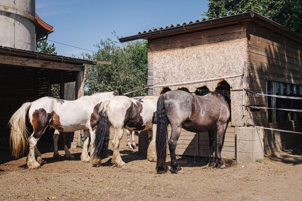 Pferdekoppel in Weitwörth