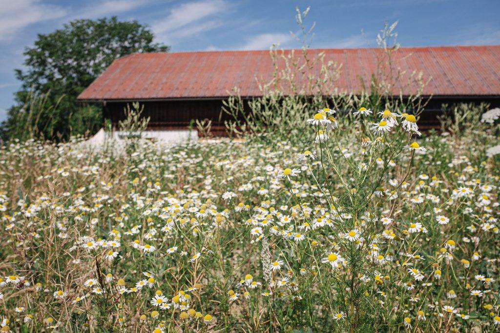 Blumenfeld in Weitwörth