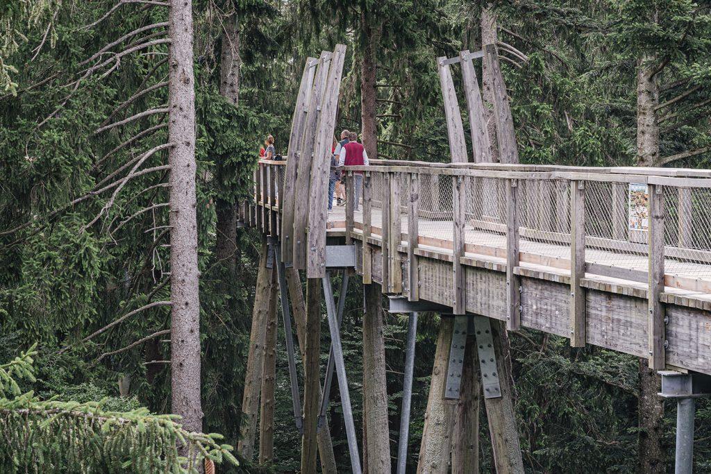 Pfad am Baumwipfelpfad Bayerischer Wald