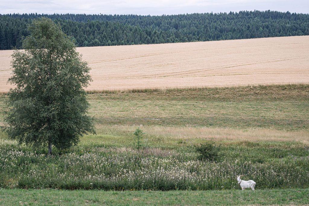 Landschaft in Landwüst