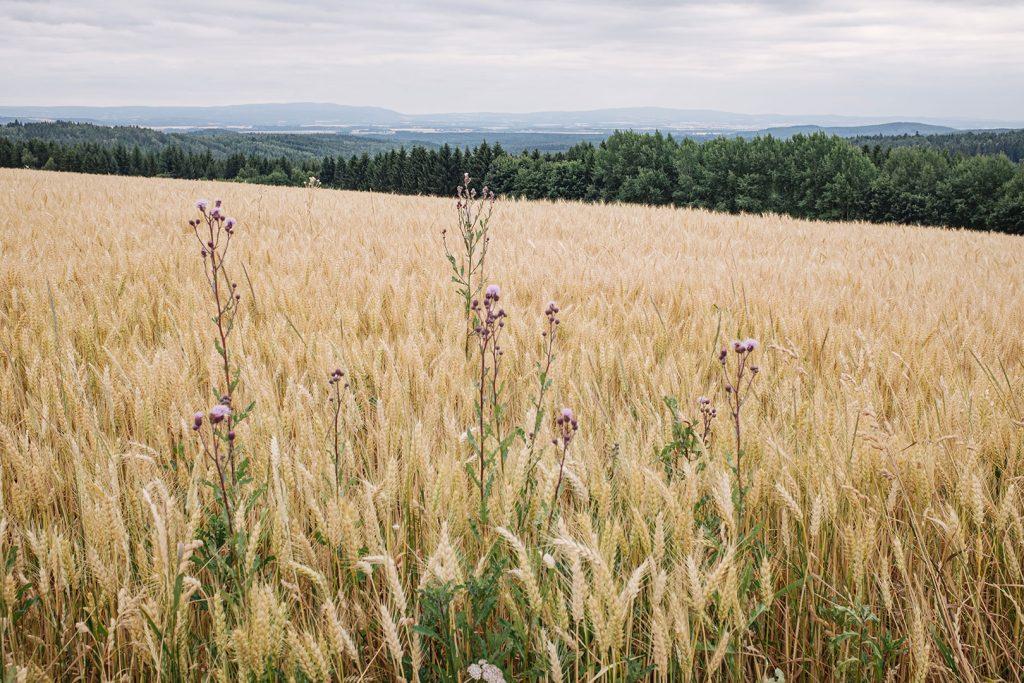 Feld in Landwüst