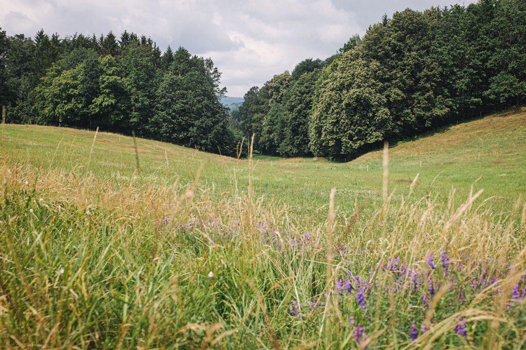 Naturwiese in Hertigswalde (Drehort Inglourious Basterds)