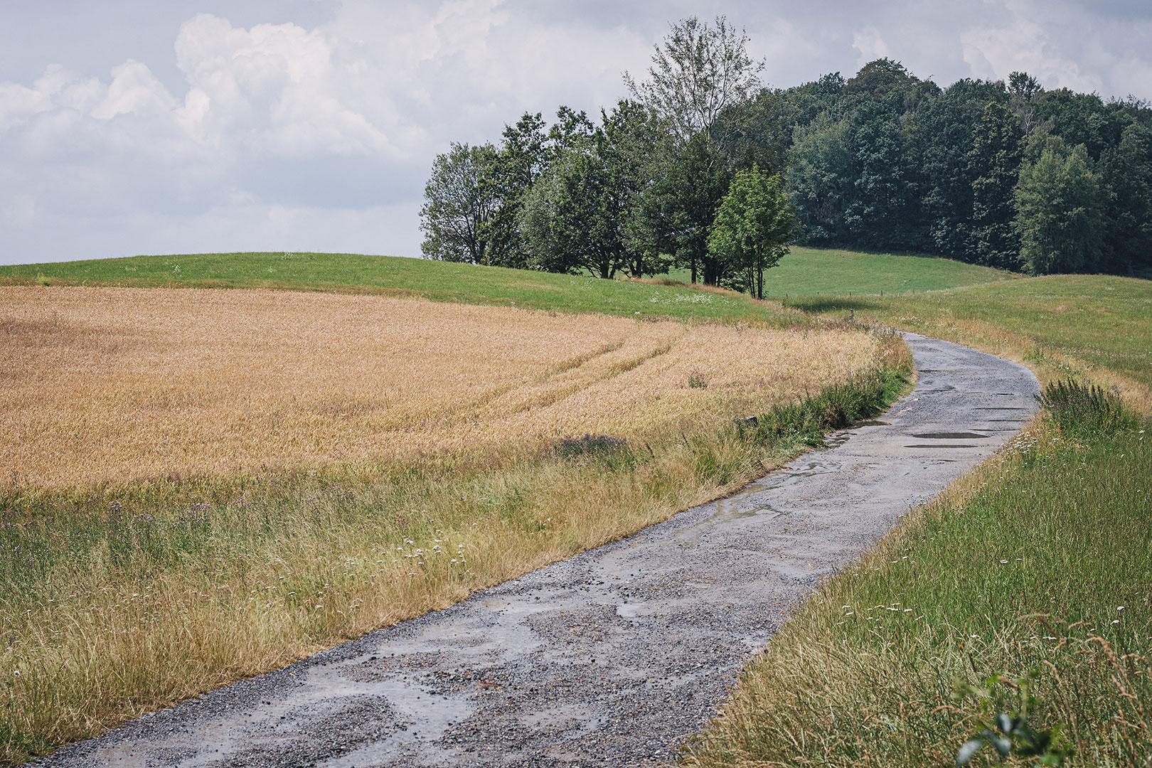 Weg und Feld in Hertigswalde (Drehort Inglourious Basterds)