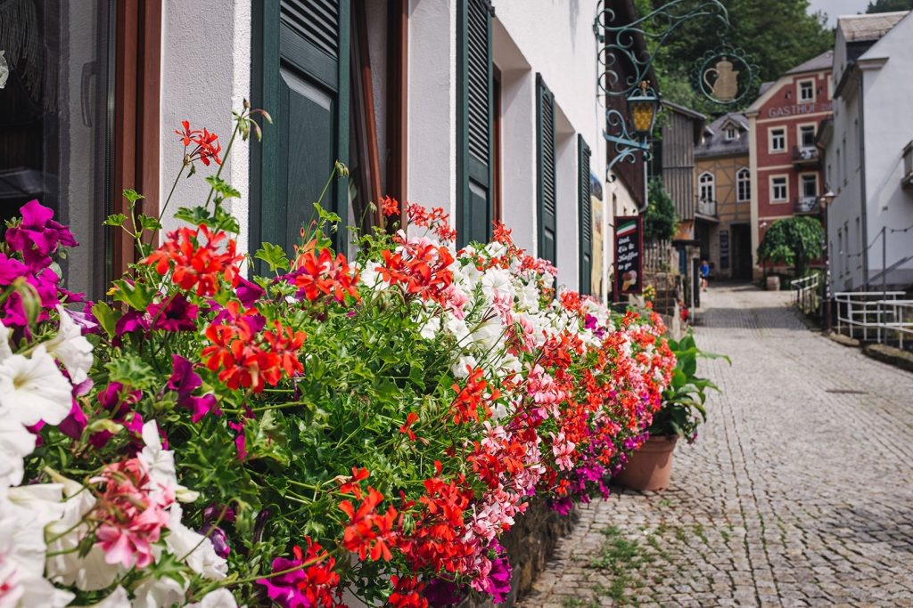 Blumen an der Straße in Schmilka