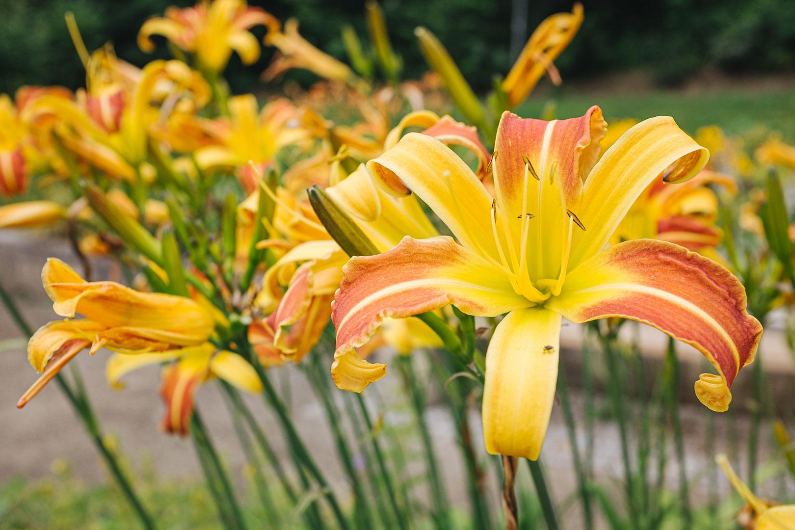 Blumen im Kurpark von Jonsdorf
