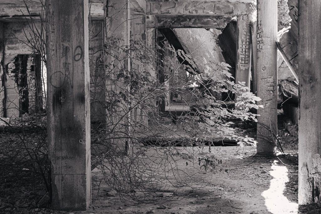 Natur holt sich die Ruine Prora zurück