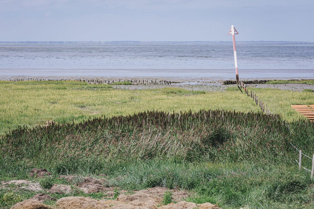 Wattenmeer im Rickelsbüller Koog
