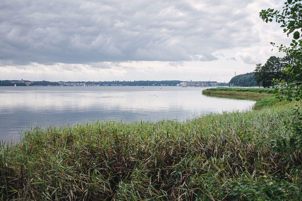 Schilf und Ostsee in Wassersleben