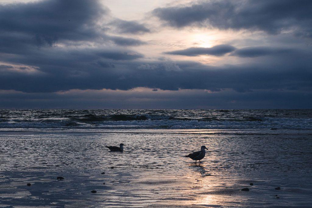 Möven bei Sonnenuntergang auf Sylt