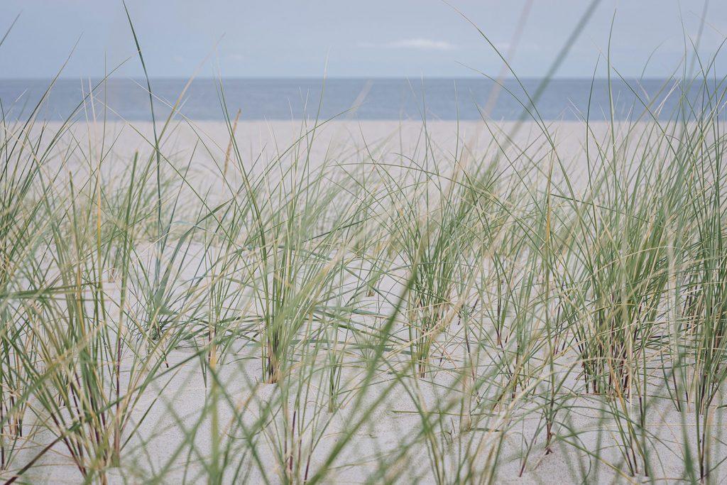 Dünen am nördlichsten Punkt Deutschlands in List auf Sylt