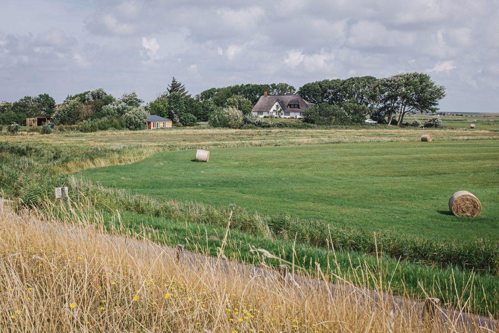 Feld in Westerhever
