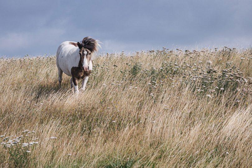 Pferd im Wind in Hellschen-Heringsand-Unterschaar