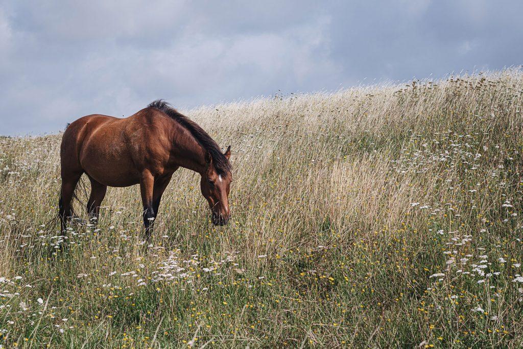 Pferd in Hellschen-Heringsand-Unterschaar